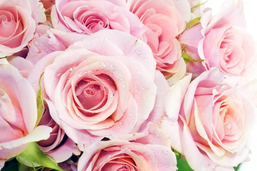 best roses wallpaper 2560x1600 for android tablet