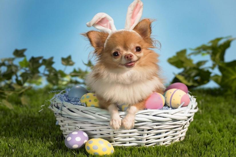 free easter backgrounds 1920x1080 download free