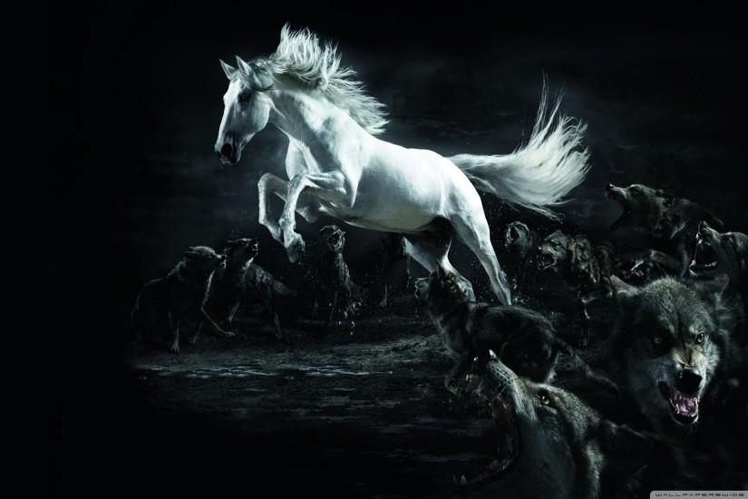 widescreen horse wallpaper 2560x1600 xiaomi