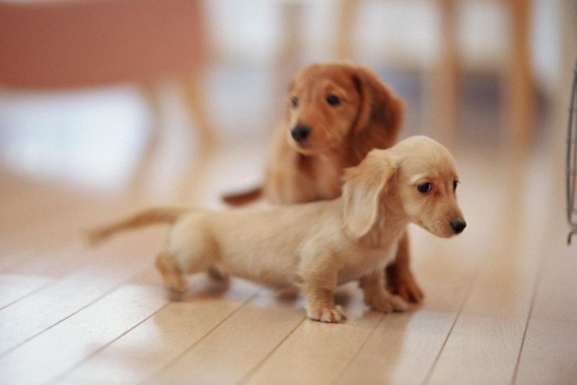 Baby dogs playing wallpaper