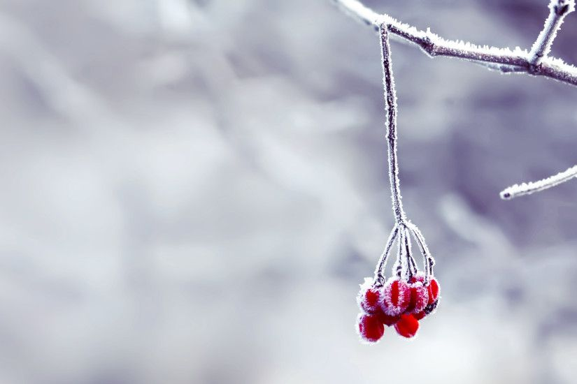 snow wallpaper berries. Â«Â«