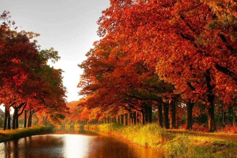 Maple trees autumn red leaves canal river forest [1920x1080] Need #iPhone  #6S #Plus #Wallpaper/ #Background for #IPhone6SPlus? Follow iPhone 6S Plu…