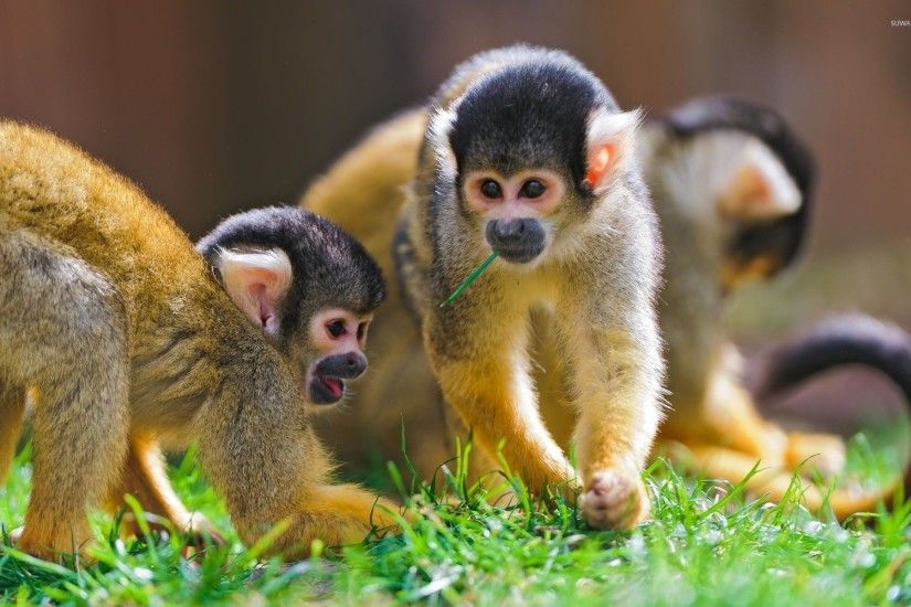 Funny Monkey HD wallpapers THIS Wallpaper 1920×1200