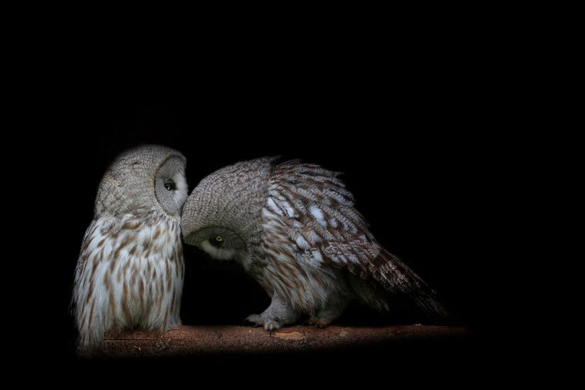 Free Download Cute Owl Photo.