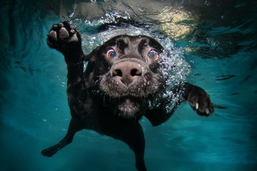 1920x1080 Wallpaper dog, black, underwater, swimming, water