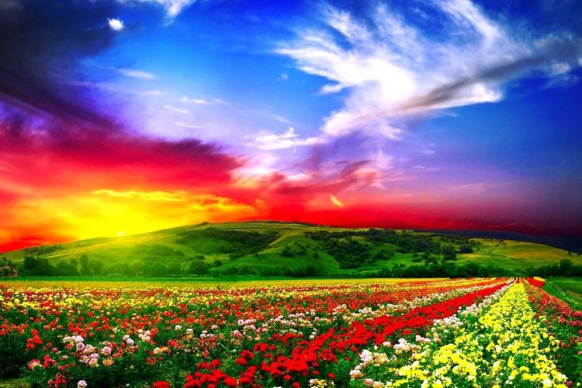 flowers, field, beautiful
