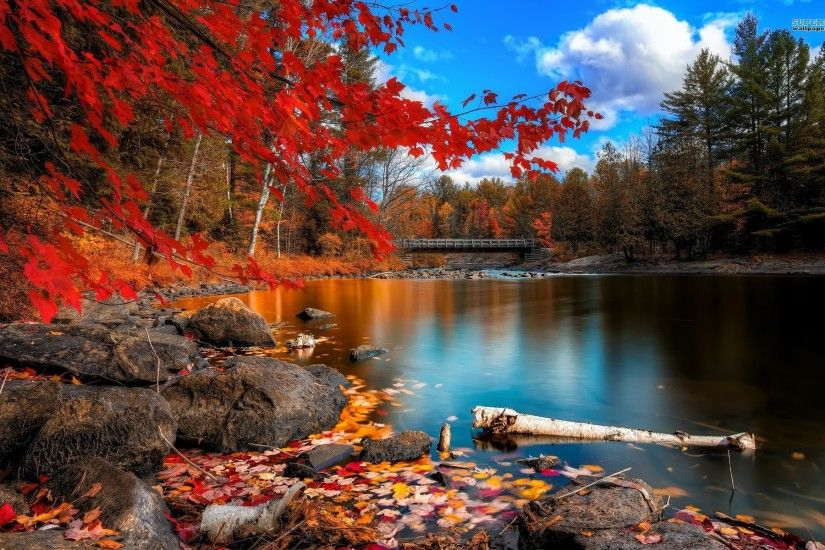 Fall Autumn Park Desktop Wallpaper - HD Wallpapers ...
