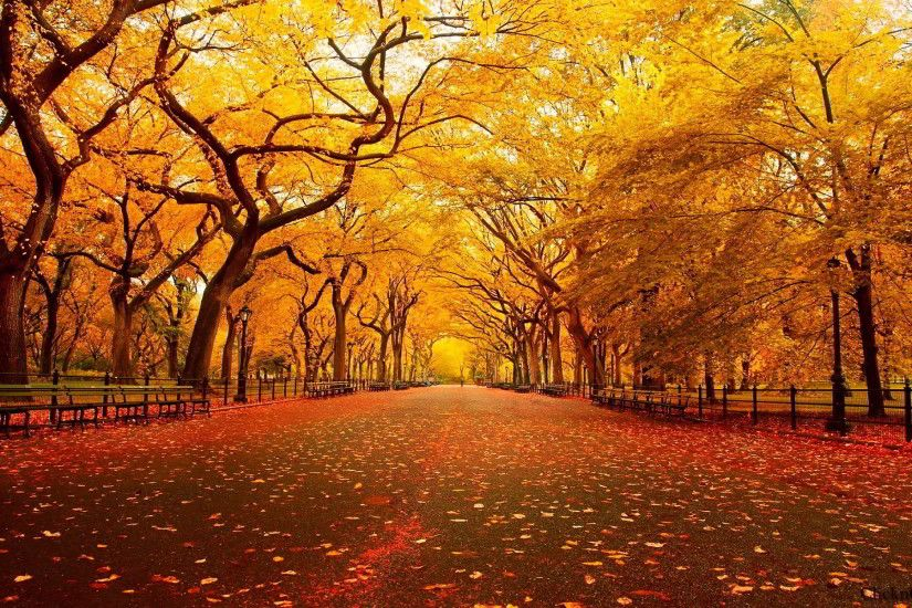 New York Central Park Fall Background