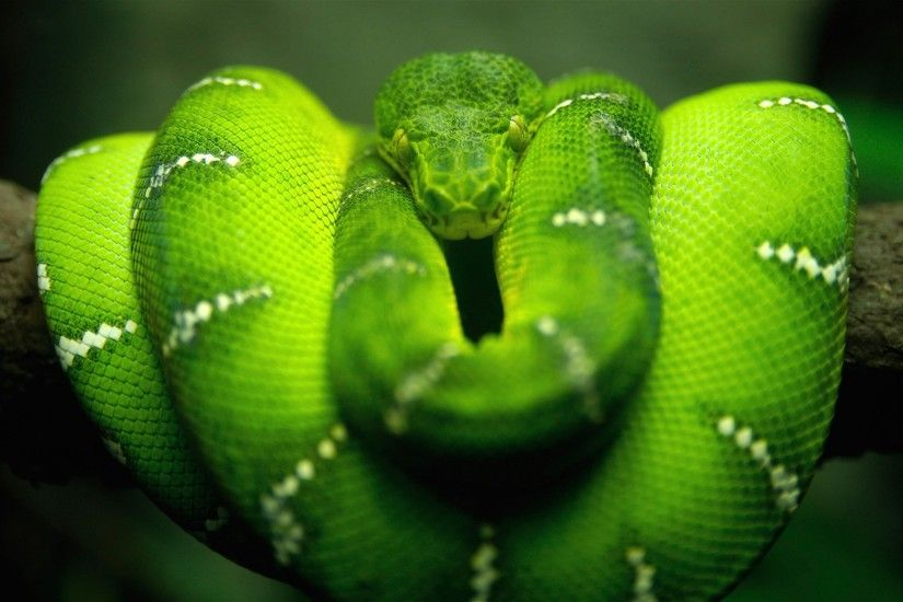 2560x1600 px Free download snake picture by Rodger Fletcher for -  pocketfullofgrace.com