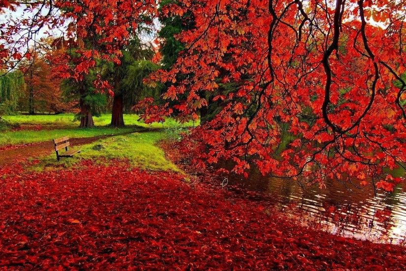 Fallen red leaves wallpaper - Photography wallpapers - #