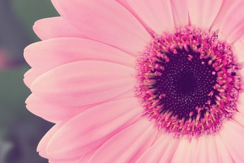 Free Pink Flower Wallpapers Desktop Background Â« Long Wallpapers ...