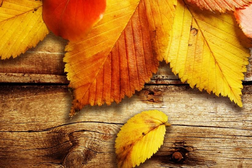 Fall Leaves Android HD Wallpapers