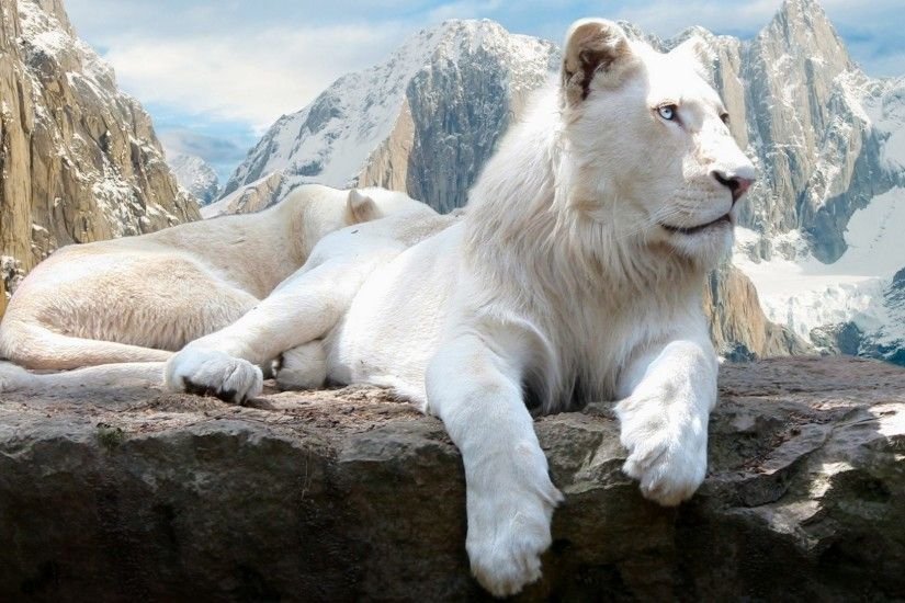 #AABBAA Color - White Lions Animals Hd Wallpaper For Desktop for HD 16:9