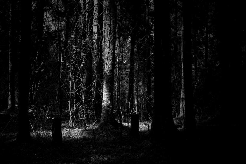 download free dark forest background 1920x1200 for computer