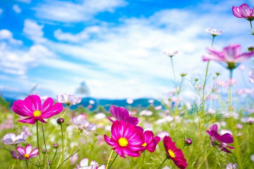 Summer Flowers Wallpaper Widescreen