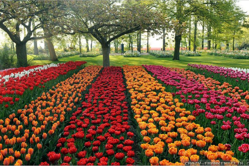 rows-beautiful-flower-garden-wallpapers-free-hd-for-