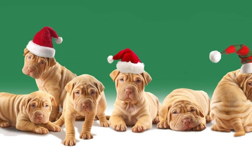 christmas animals wallpapers - Google Search