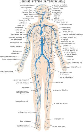 Human Physiology Skeletal System Full Hd Wallpapers Anatomy Of Full Body  Images - Learn Human Anatomy Image