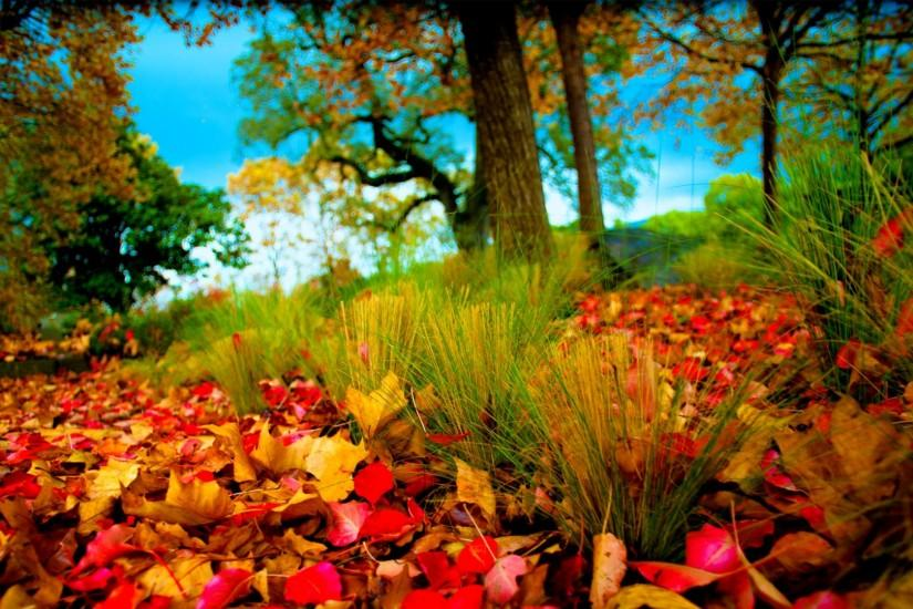 Wallpaper Hd Phd Wallpaper Autumn Leaves And Fall Colors For X Hdtv Uvtzxkh