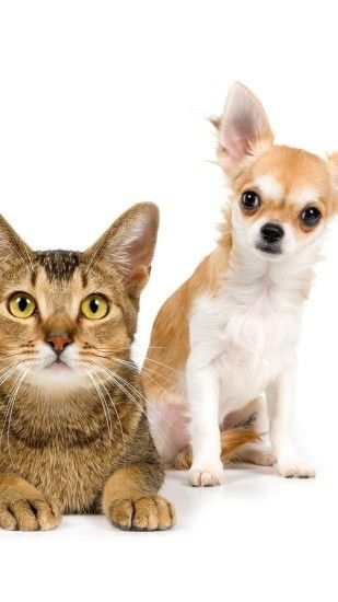 1080x1920 Wallpaper cat, dog, friends, couple, photo shoot