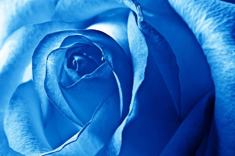 hd beautiful flower · Blue Flower WallpaperBlue ...