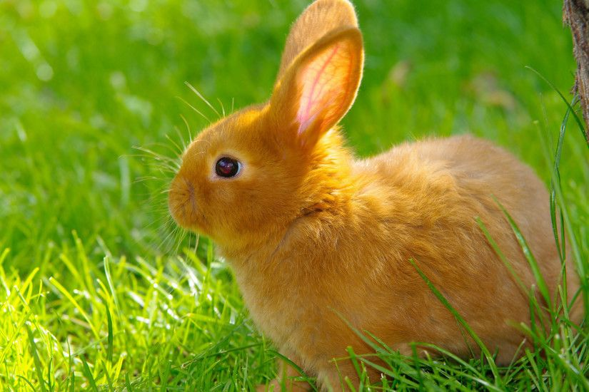 Cute Rabbits Cute Rabbit Hd Wallpapers animals bunnies