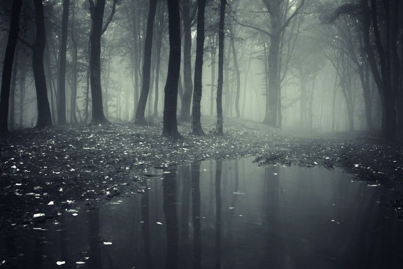 Mist Dark Mystic Forest Fog Nature Rain Desktop Wallpaper - 1920x1200