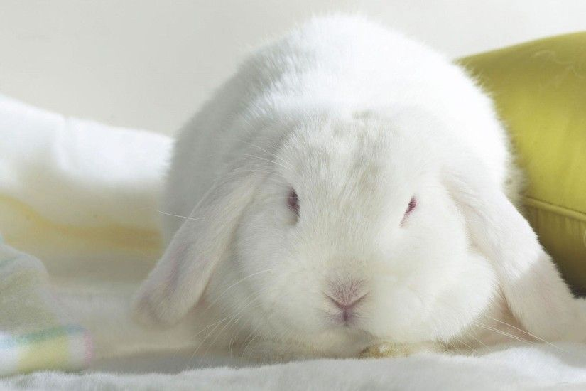 Cute Bunny Wallpaper In 1920x1200 Resolution Free Wallpapers Download