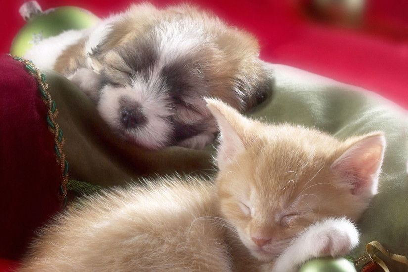 hd pics photos attractive christmas pets kitten puppy cat dog sleeping  beautiful nice hd quality desktop