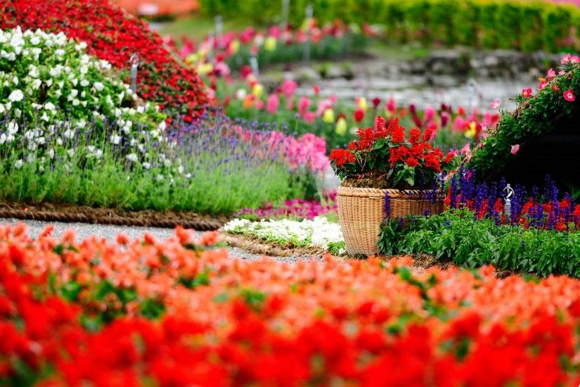 Flowers-Garden-HD-Wallpapers-free-for-desktop