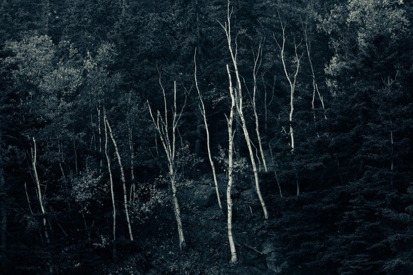 Dark Nature Trees Night Black Forest Wallpapers Hd 3d - 2560x1600