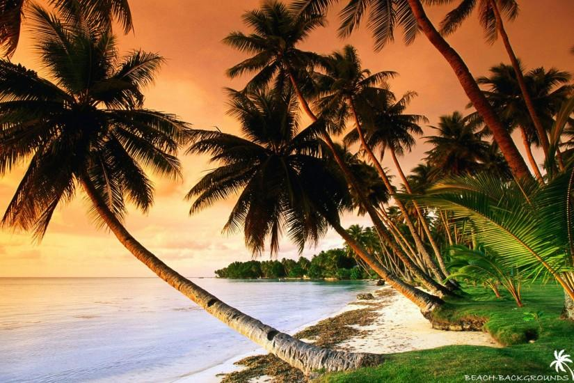 Beautiful beach palm trees on sunset - Beach Wallpapers