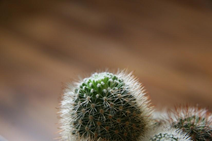 Cactus Wallpaper Background 6032