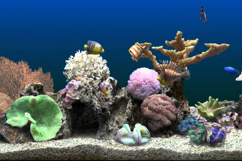 Full Size of Fish Tank Marine Aquarium Virtualshtank Youtubesh Tank Games  Aquariumaquarium For Sale Tanks In ...