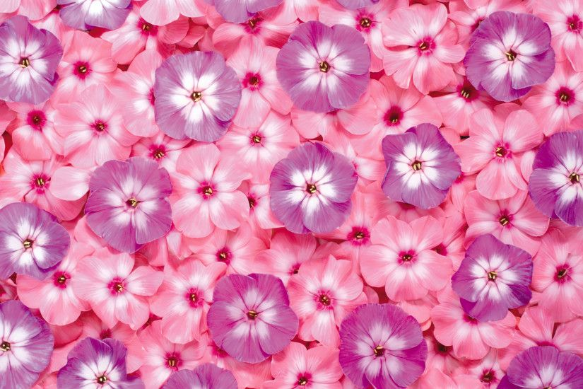first series of flowers background 13647 Flower background Flowers