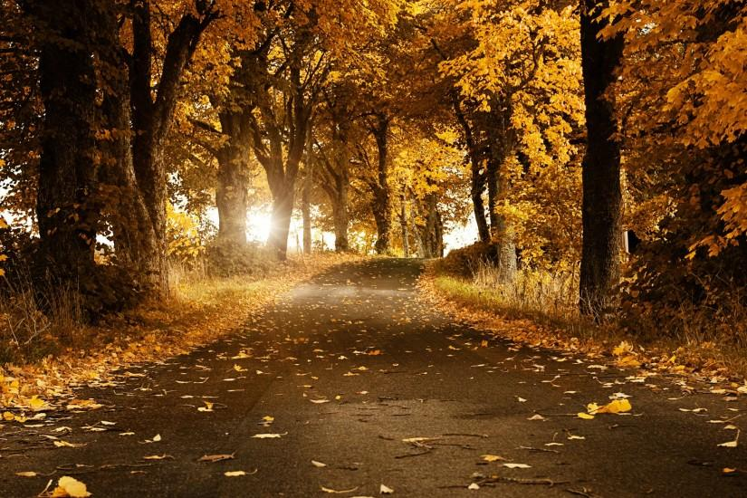 Autumn Breeze Wallpapers | HD Wallpapers