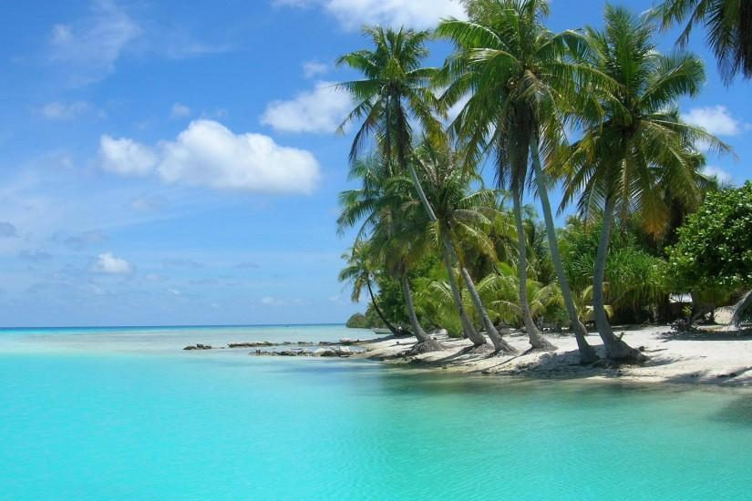 Palm Tree Beach Wallpaper image gallery