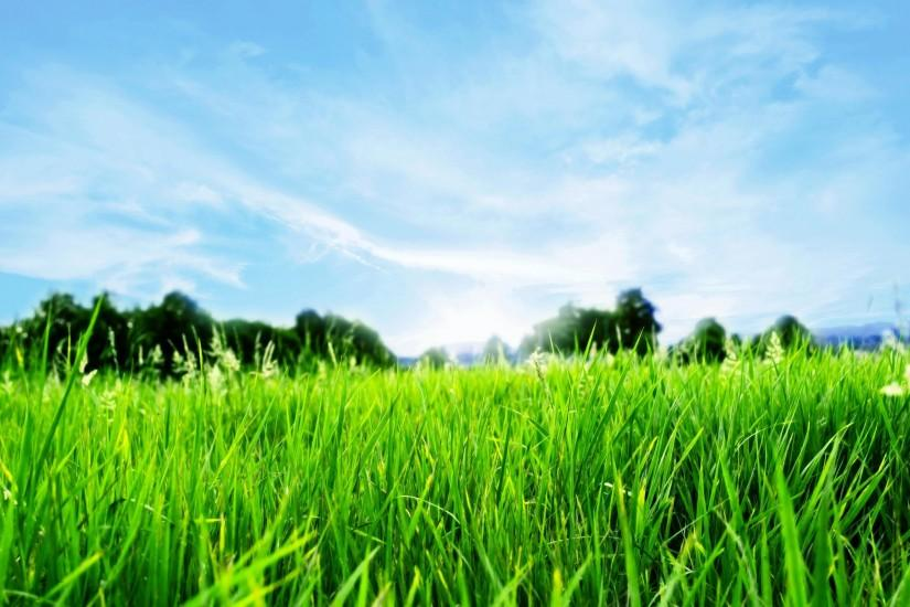 free download grass wallpaper 2560x1600