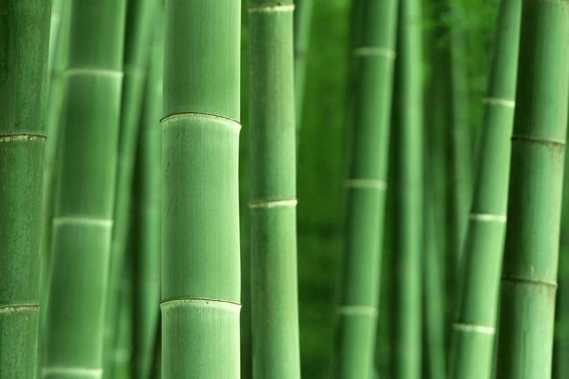 new bamboo wallpaper 1920x1200 for windows