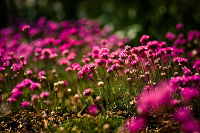 ... Free Download Pink Flowers Backgrounds - wallpaper.wiki ...
