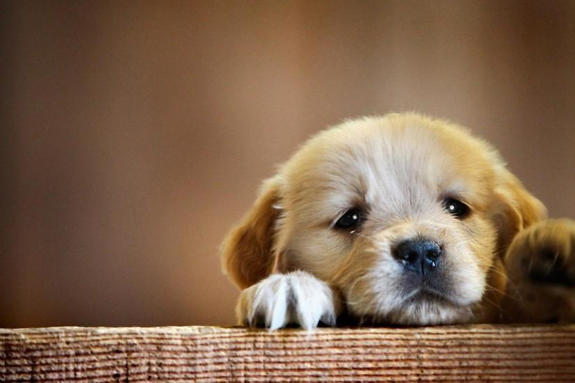 Download 1920x1080 Puppy, Snout, Dog Wallpaper, Background Full HD .