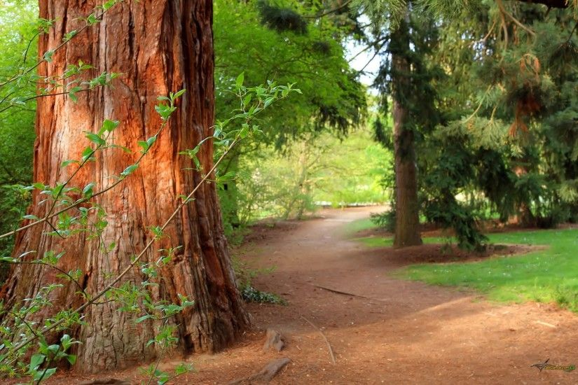 forest tree trail nature path forest pine tree summer