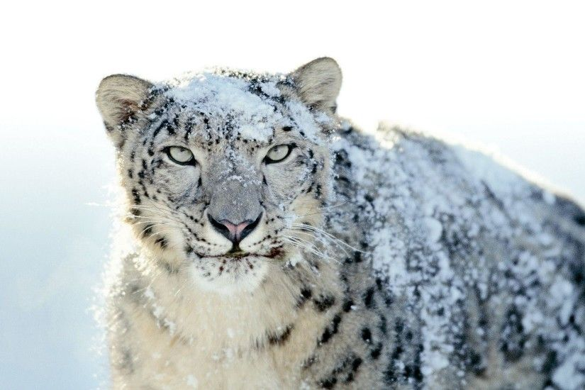 Mac OS X Snow Leopard wallpaper Wallpapers - HD Wallpapers 71757