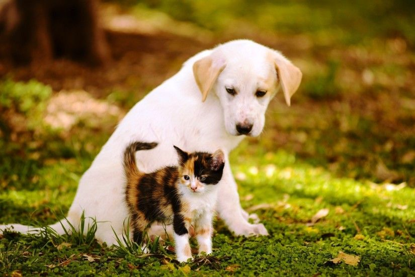 Cute Baby Cats And Dogs wwwgalleryhipcom The Hippest