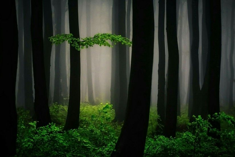 Lost in the mystic forest wallpaper