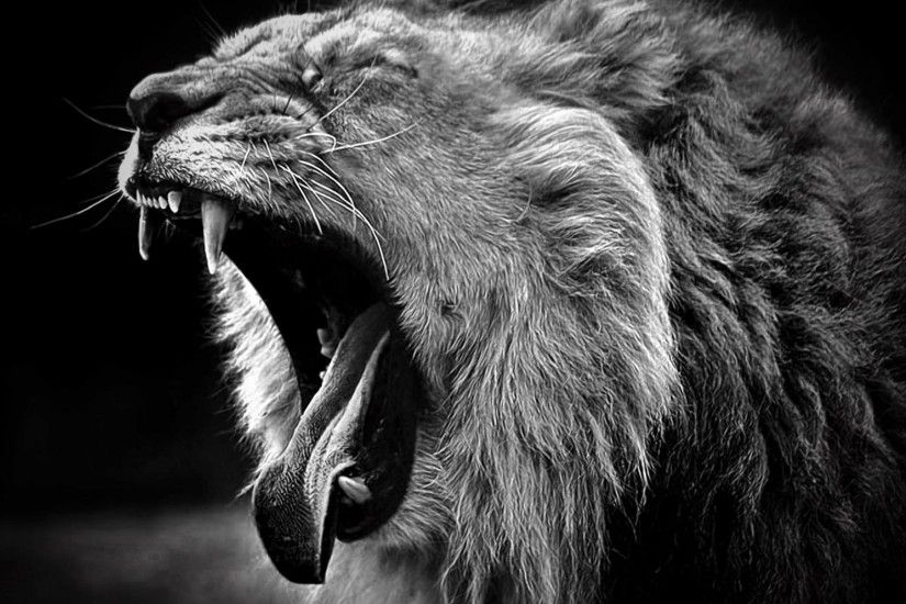 Wallpapers Lion Animals Black And White Open Yawn 2560×2048 .