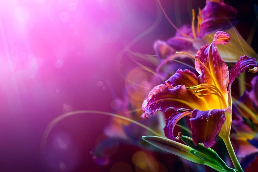 Violet, Flower, Widescreen, High, Resolution, Desktop, Background, Photos,