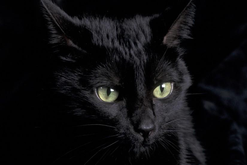 ... Black Cat Wallpapers HD ...