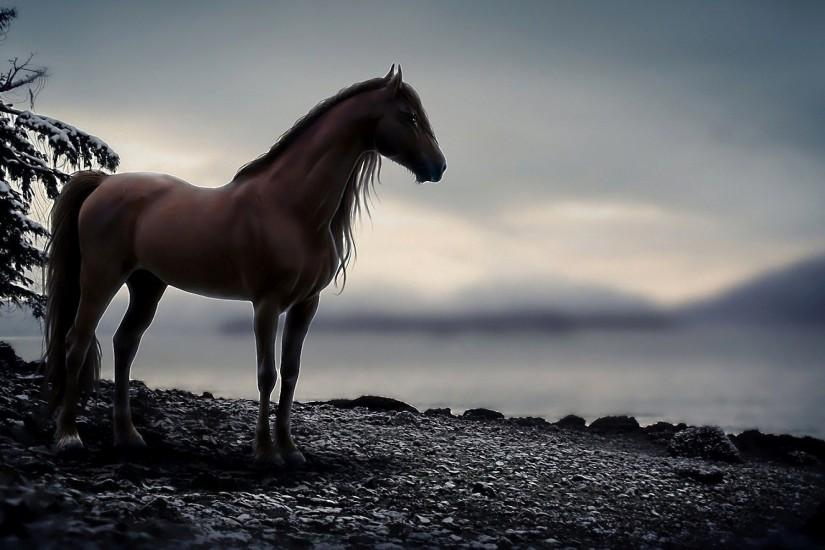 ... 1157 Horse HD Wallpapers | Backgrounds - Wallpaper Abyss ...