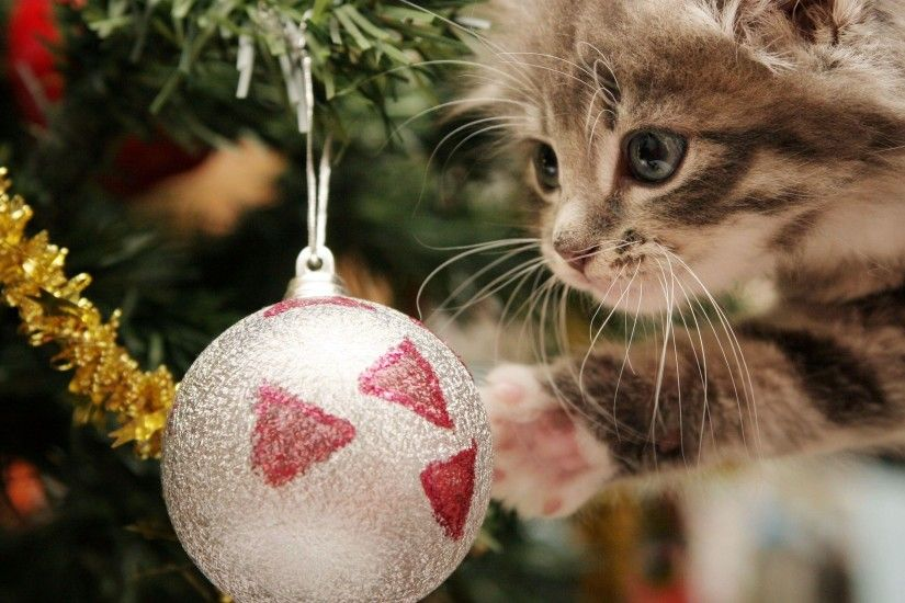 Christmas Cat Wallpapers - HD Wallpapers Inn